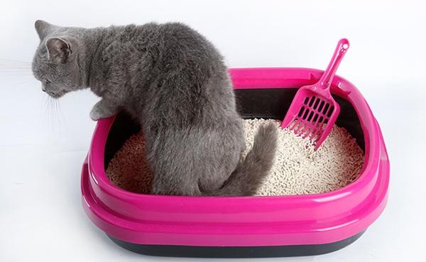 伊贝斯 开放式猫砂盆