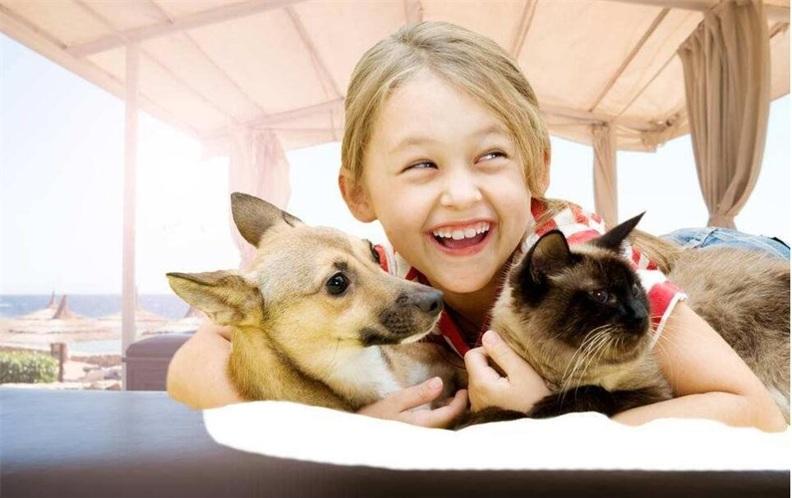 2018年深圳市福田区最好的宠物医院排行榜(上篇)