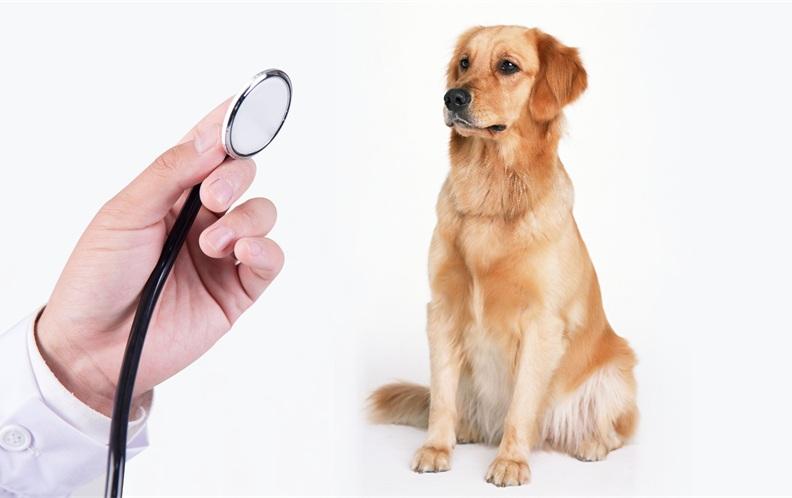 2018年深圳市龙岗区最好的宠物医院排行榜(下篇)