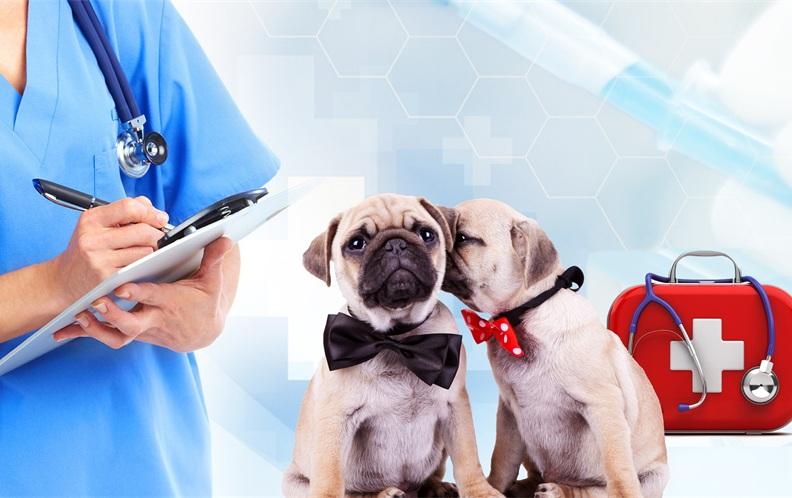 2018年深圳市南山区最好的宠物医院排行榜(上篇)