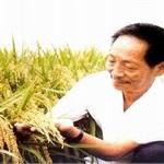 中间商为何能激怒袁隆平 水稻种子命脉在哪