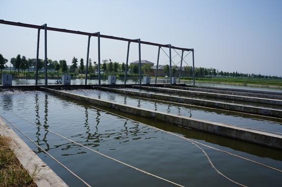 """非""""涸泽而渔""""IPA 可持续的池塘养鱼技术"""