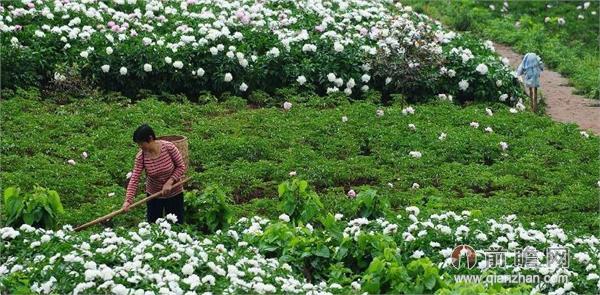 中江生态农业