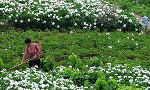中江生态农业科技示范园总体规划案例