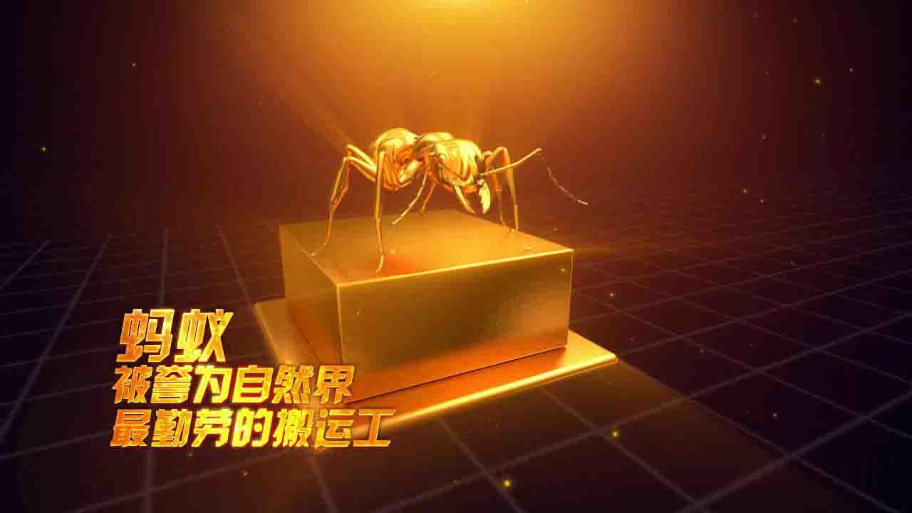 """中国智慧物流大会暨 物流行业""""金蚂蚁""""颁奖盛典"""