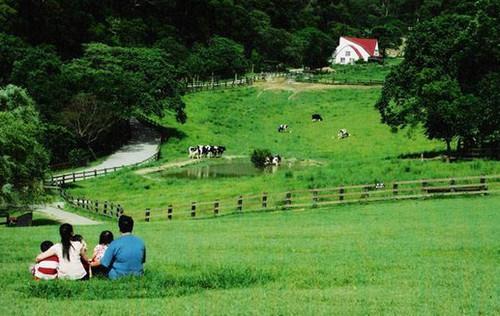 台湾飞牛牧场
