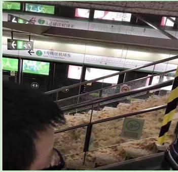 """图表1:""""水流成河""""的深圳地铁站"""