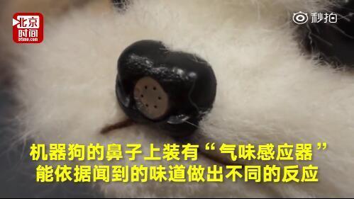 日本研发用来闻脚臭机器狗 闻到臭脚丫子后会晕倒并喷清新剂