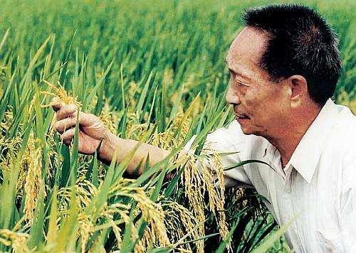 袁隆平宣布成果剔除镉基因 海水稻成功每年可增加8400万吨粮食