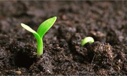 种子市场规模稳步上升 行业整合速度明显加快