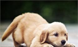 宠物经济火爆 宠物用品及服务行业迎来黄金发展期