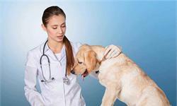 宠物医疗需求持续释放 未来如何寻求更大发展空间?