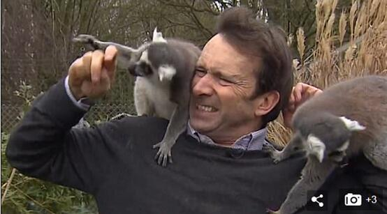 英国记者被猴围攻