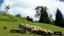 田园综合体优秀案例——台湾清境农场