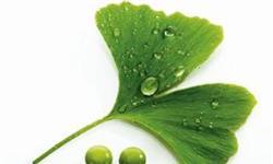 2018年植物提取物行业竞争现状与趋势分析 准入门槛将提升