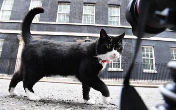 英国捕鼠官被制裁