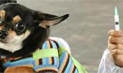 动物疫苗行业发展现状分析 宠物疫苗市场迎机遇