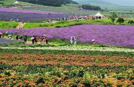 休闲农业和乡村旅游行业分析,政策持续放量,市场前景明朗