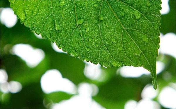 植物提取物行业