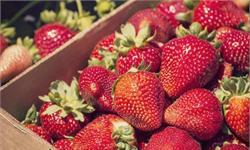 吃货注意!最脏蔬果草莓居首 网友:吓得我赶紧吃个牛油果压压惊