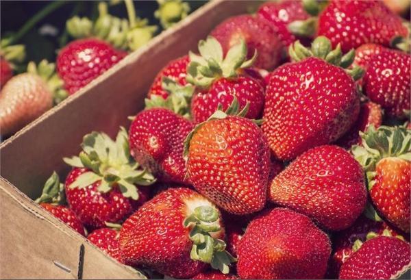 最脏蔬果草莓
