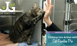 """萌化了!美国发起""""猫咪击掌""""活动 <em>视频</em>超有爱呼吁人们关爱流浪猫"""