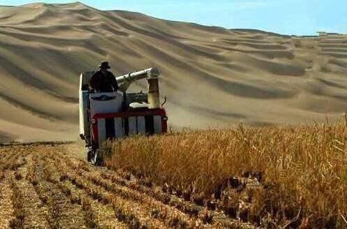 沙漠种植水稻成功