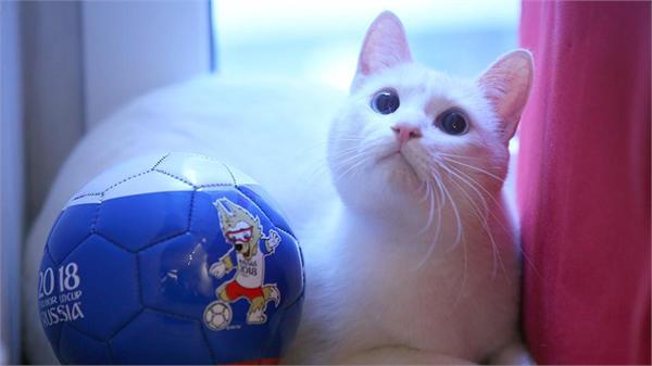 2018俄罗斯世界杯猫咪预言家