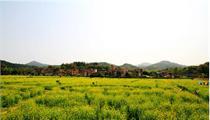 广州加强规划设计建设美丽乡村