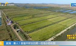 中国首批海水稻品种!袁隆平领导研发 预计明年将面世2020年大范围种植