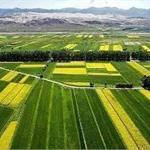 中国农业产业化发展趋势 农村金融服务作用重要