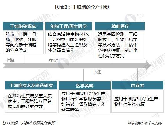 图表2:干细胞的全产业链
