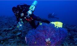 科学家寻找治愈骨折新方法,珊瑚或许是完美的答案