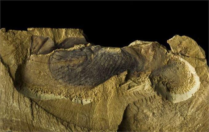 云南小县城发掘的1块化石 让全球生物起源时间向前推了几千万年