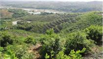 常德油茶产业发展规划解读