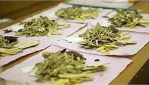 甘肃省出台中药产业发展计划