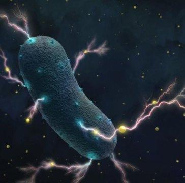 发现肠道细菌的小秘密?让你生病的它们也能被用来发电