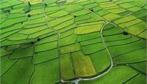 农业综合开发是什么?如何申报?