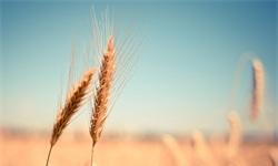 农业产业迎新发展机遇 融合AI技术警惕三方面发展