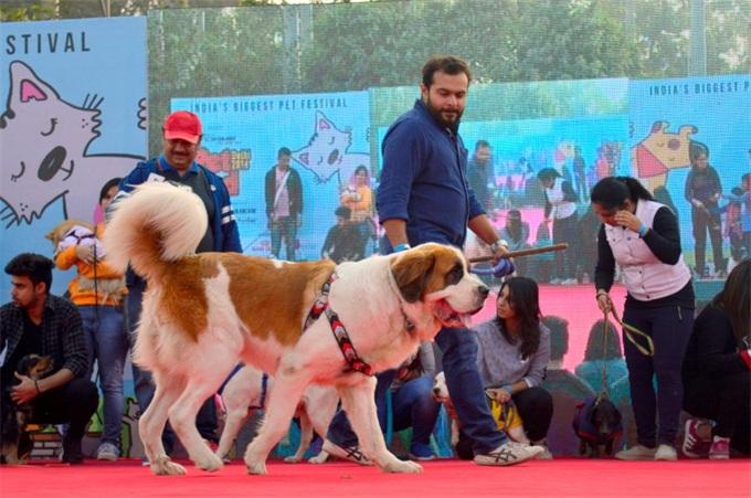 卡哇伊!印度举行宠物节众多萌宠云集 趣味活动包括时装表演