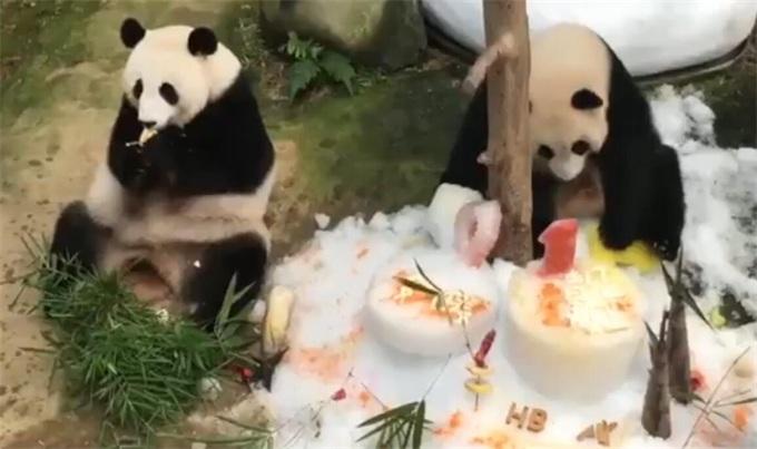 马来西亚还大熊猫