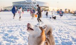 数据热|全国56%的宠物生活在东部沿海城市,男人的消费能力不如狗