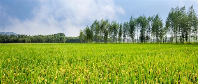 """华为辟谣种植水稻:合作是真的,偏离""""主航道""""的业务不做"""