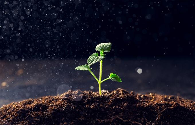 不寻常的212.75小时!嫦娥四号首次月面生物实验:棉花种子长出了嫩芽