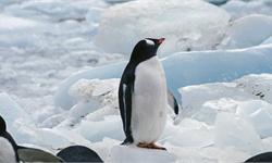 南极冰盖再次亮红灯:二氧化碳水平过高 南极海冰或将永久消失