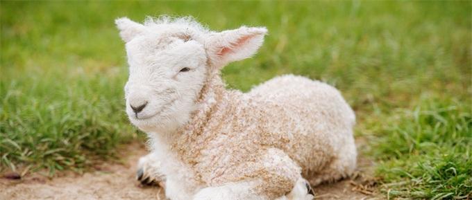 """""""薅羊毛""""买牛奶惨亏4万"""