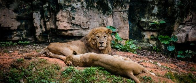 美国男掐死美洲狮 跑步途中遭幼狮背后扑袭手、背、脸受重伤