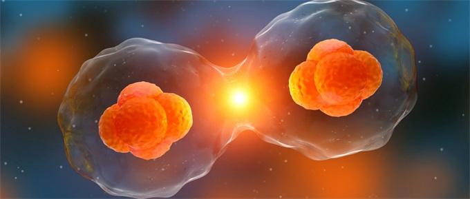 每个人天生都对癌症免疫?长期被忽视的免疫系统揭示癌症新疗法!