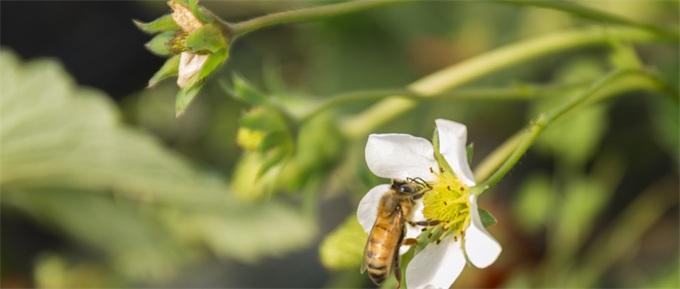 全球昆虫数目减少