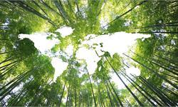 世界绿化面积多了一个亚马逊雨林:中国贡献最大 植树计划和集约种植立大功